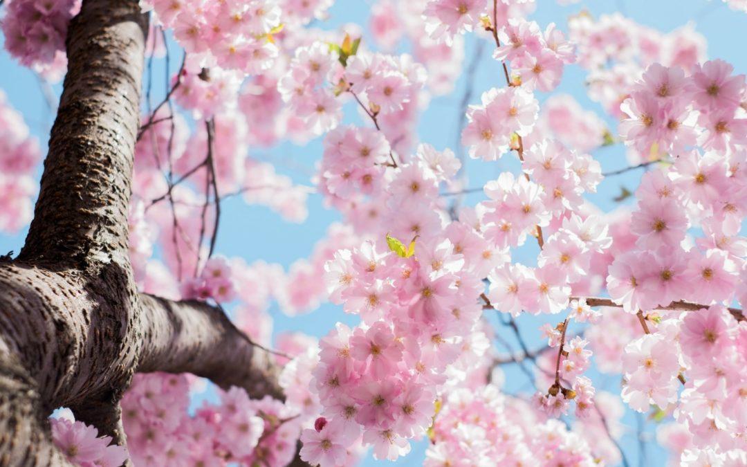 Mindfulness: hjälp att ta ett större ansvar för ditt liv